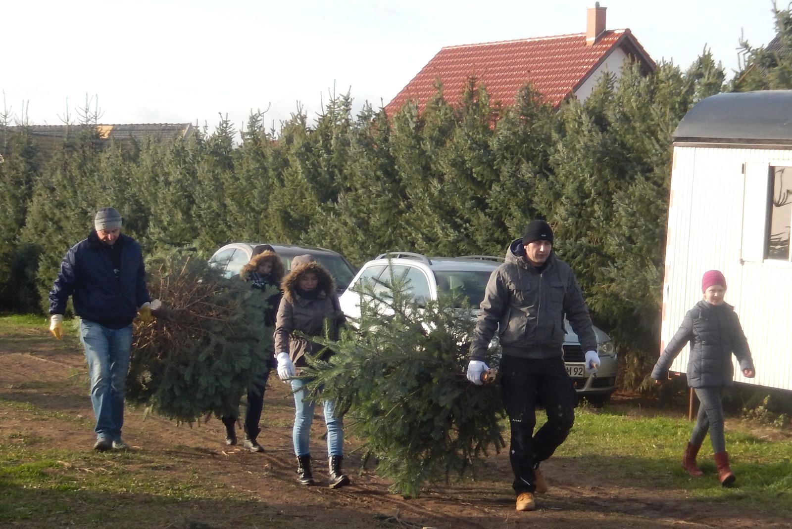 best 28 weihnachtsbaum selber schlagen leipzig weihnachtsbaum plantage selber schlagen. Black Bedroom Furniture Sets. Home Design Ideas