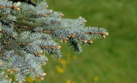 Weihnachtsbaum Verkauf In Altenburg Parkplatz Möbel Boss Expert
