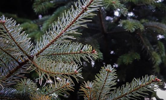 Weihnachtsbaum Kaufen Chemnitz.Weihnachtsbaum Verkauf In Chemnitz Reifen Seifert